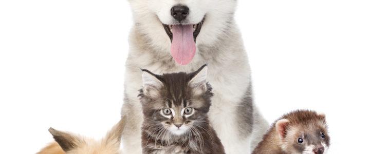 Comment se passe une consultation chez le vétérinaire?
