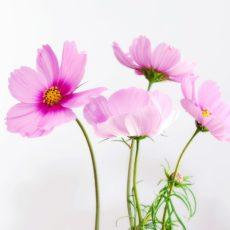 Montrez votre amour grâce aux fleurs